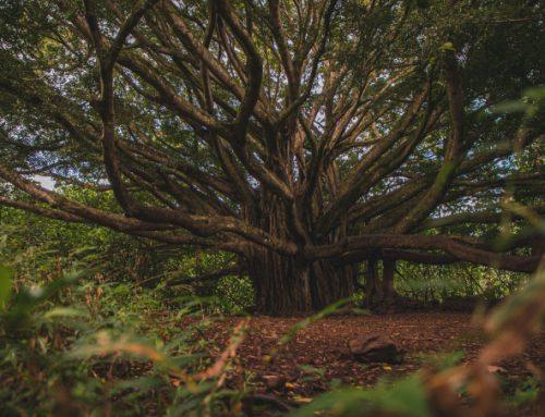 [마음의 지도] 나무로