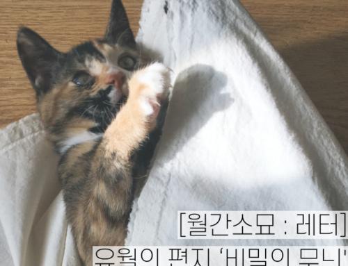 [월간소묘: 레터] 유월의 편지 '비밀의 무늬'